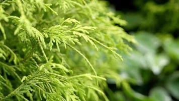 Green plants background photo