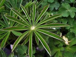 UNIQUE PLANT photo