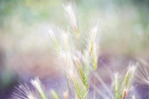 Meadow plants photo