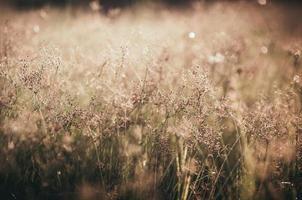 Grass bloom plant