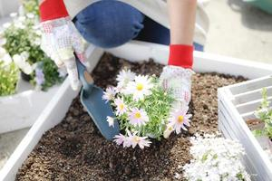 I plant flowers