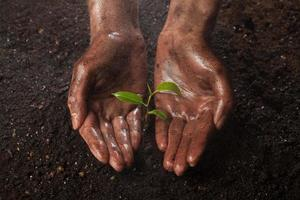 hands holding green plant photo
