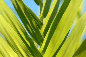 plantas verdes frescas al aire libre foto
