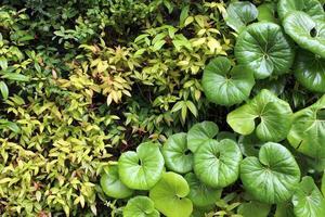 Wall of foliage plant photo