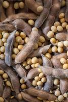 soybean pod photo
