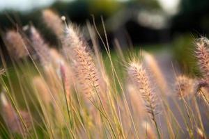 close-up van planten paardebloemen