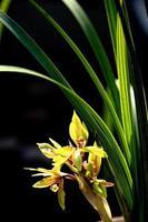 planta, orquídea, fragante hierbabuena,
