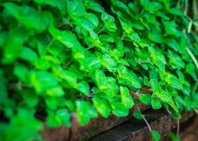 Green plant on the wall photo