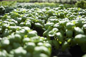 Green plants growing in field photo