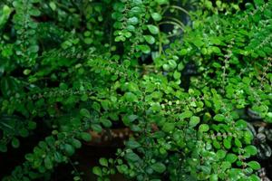 leaves of green plants 2