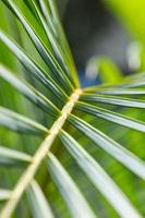background of green palm tree leaves