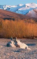 Balancing rocks on background of yellow willow trees