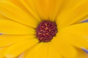 Yelow macro flower