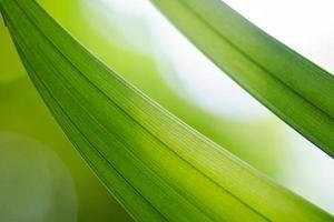 hoja verde en la imagen de fondo foto