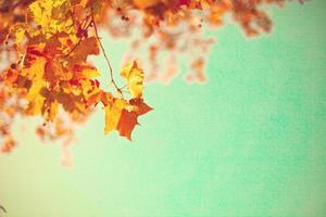 Gold Autumn Leafs