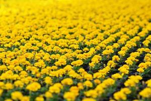 gele bloempotten