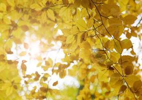 lindo fundo de outono