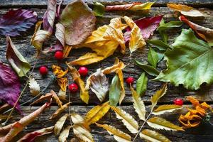 Dry colorful autumn leaves background photo