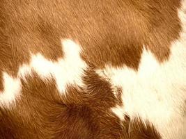 fondo de piel de vaca