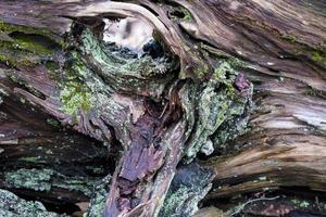 tronco cubierto de musgo foto