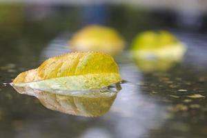 folha de outono na água