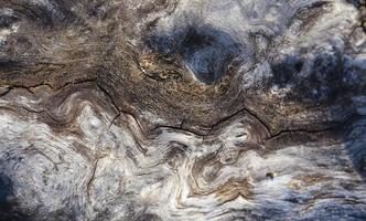 Foto de corteza de corteza de tronco de roble de textura de árbol - imagen de stock
