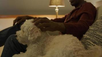 Hombre maduro en el sofá acariciando perro mascota video