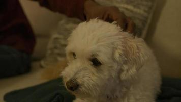 Cerca del hombre acariciando perro mascota