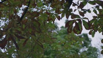 ângulo baixo das folhas nas árvores video
