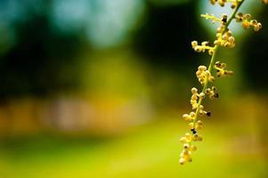 planta con bayas foto