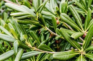Tropical plant leafs. photo
