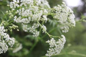 floración de plantas foto