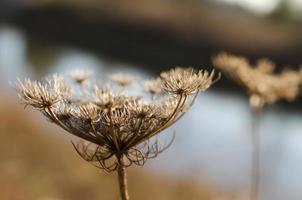 Fall plant-horizontal