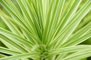 Green leafy plant photo