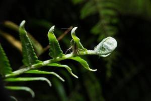 araña que sostiene la planta de helecho.