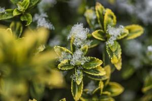 frosty plant from winter nature