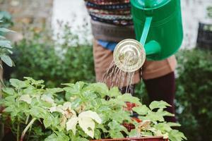 Urban garden. Girl watering plants