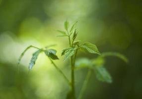 gros plan d'une plante verte