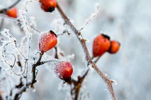 Frozen contrast plant  on snow background