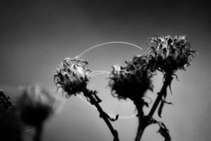 Plantas muertas en blanco y negro cubiertas de telarañas