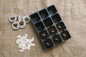 Seeds planted in the potting shed. Horizontal format