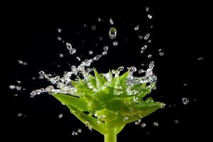 splashin gocce d'acqua sulla pianta verde a sfondo nero