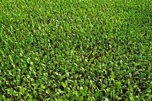 plantas que crecen dentro de macetas dentro de un invernadero