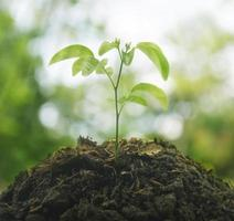 Small plant on pile of soil, New life concept photo