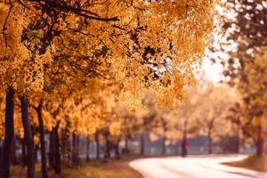 mooie gouden doucheboom onder blauwe hemel