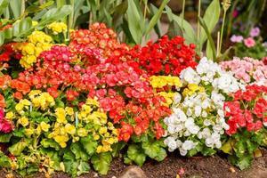 Color ful little flower blossom in garden