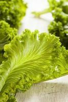 Organic Raw Mustard Greens photo