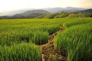 campos de arroz al atardecer