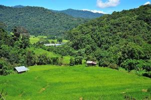 arrozales en la montaña