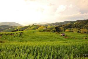 campos de arroz en las colinas